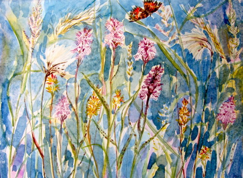 Machair Flowers