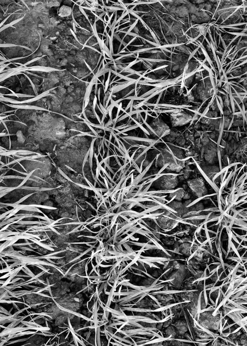 The Field - December #1