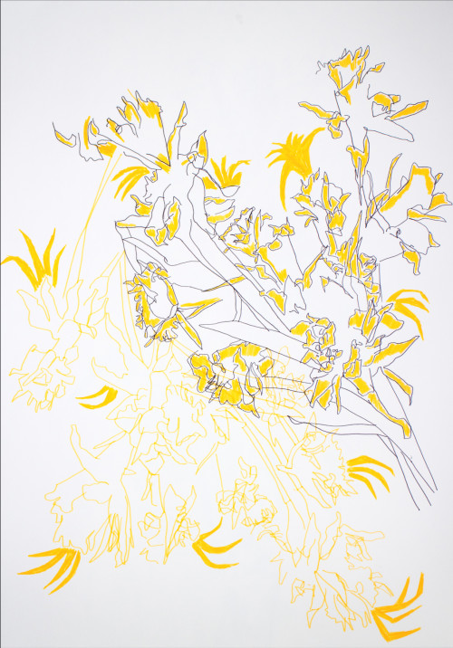 Dying Daffies