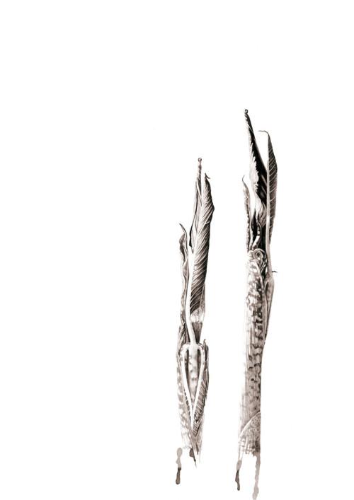 Ink shoots - Arisaema galeiforme Serizawa