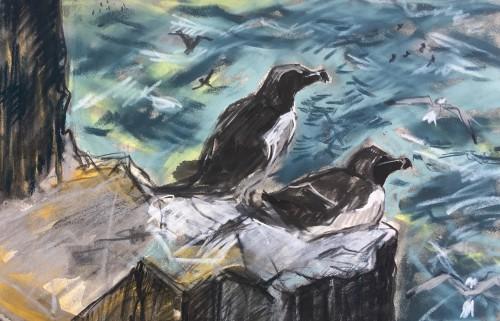 Razorbills in the wind