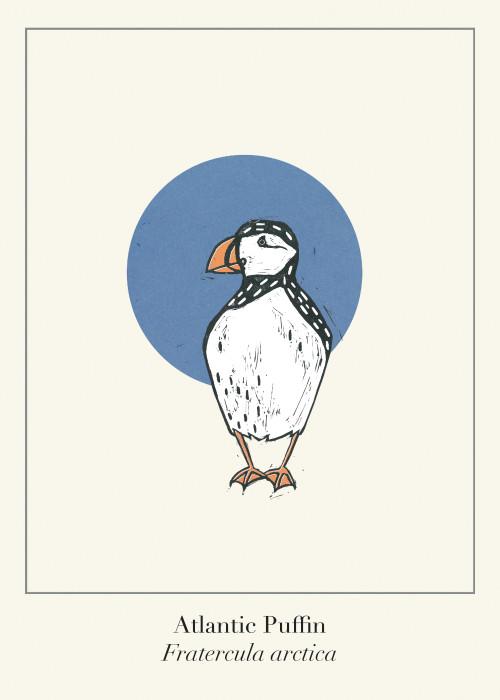 Protected Scottish Wild Animals- Atlantic Puffin