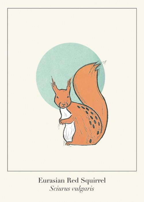 Protected Scottish Wild Animals- Red Squirrel