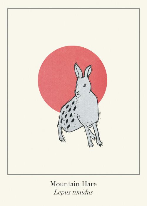 Protected Scottish Wild Animals- Mountain Hare