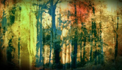 Woods IV