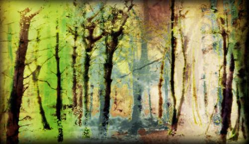 Woods X